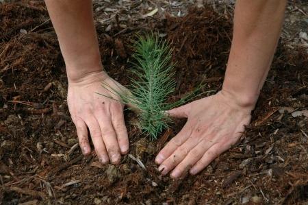 Seedlingsm