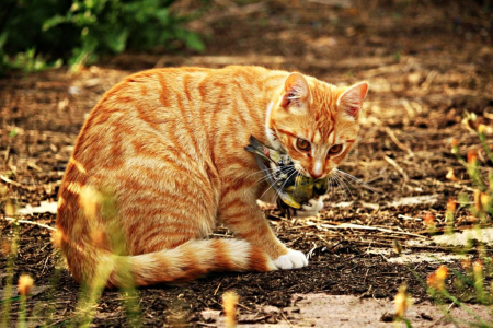 Cat-1511023_1920-1024x683